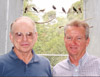 Songbird research