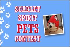 Pets Contest
